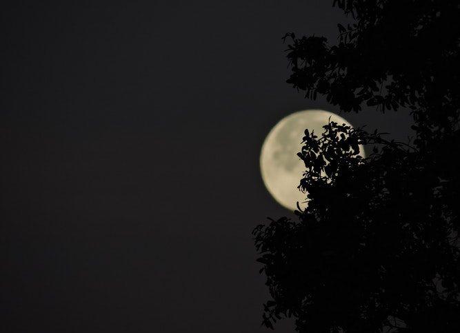 Super lune observable au-delà d'un arbre