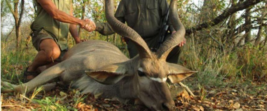 Safari-chasse: Des activistes traquent les adeptes de cette pratique sur le net