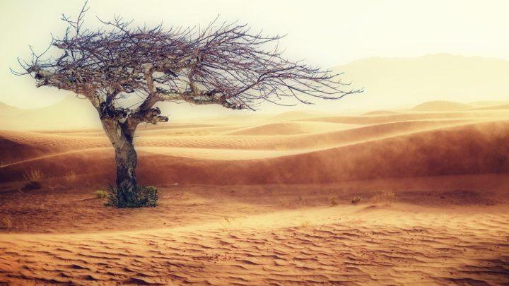Changement climatique : l'homme ne peut déjà plus survivre à certains endroits dans le monde