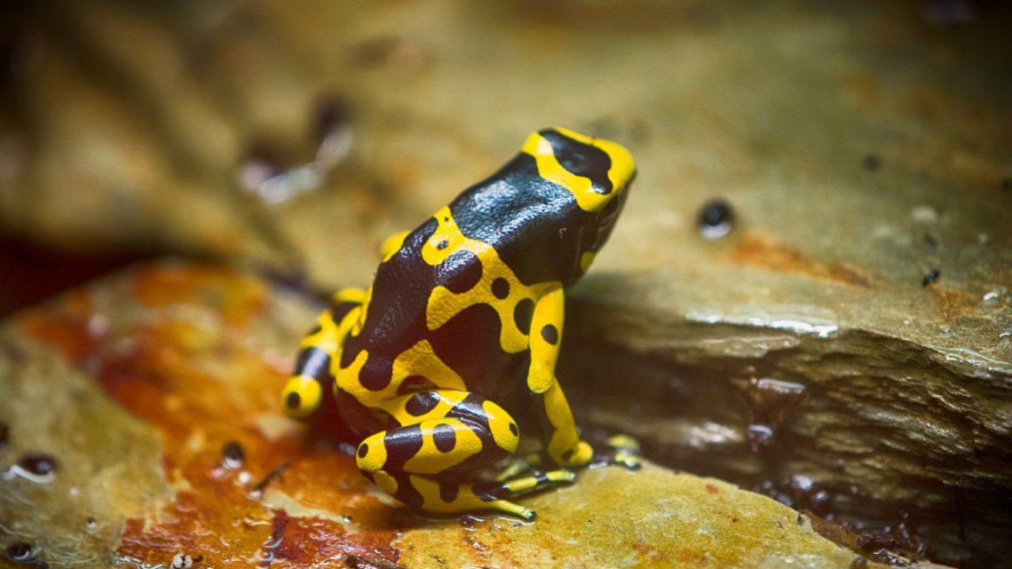La crise de la biodiversité s'accélère