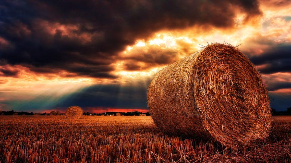 Le monde menacé par une crise alimentaire imminente