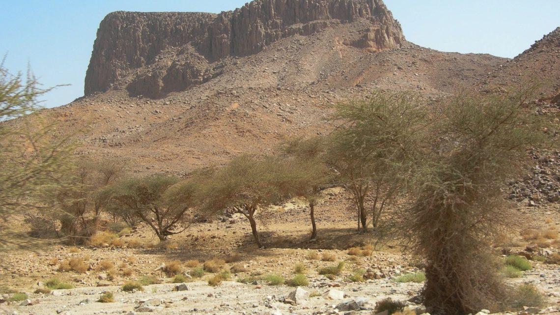 1,8 milliard d'arbres dénichés dans le Sahara et au Sahel via l'IA