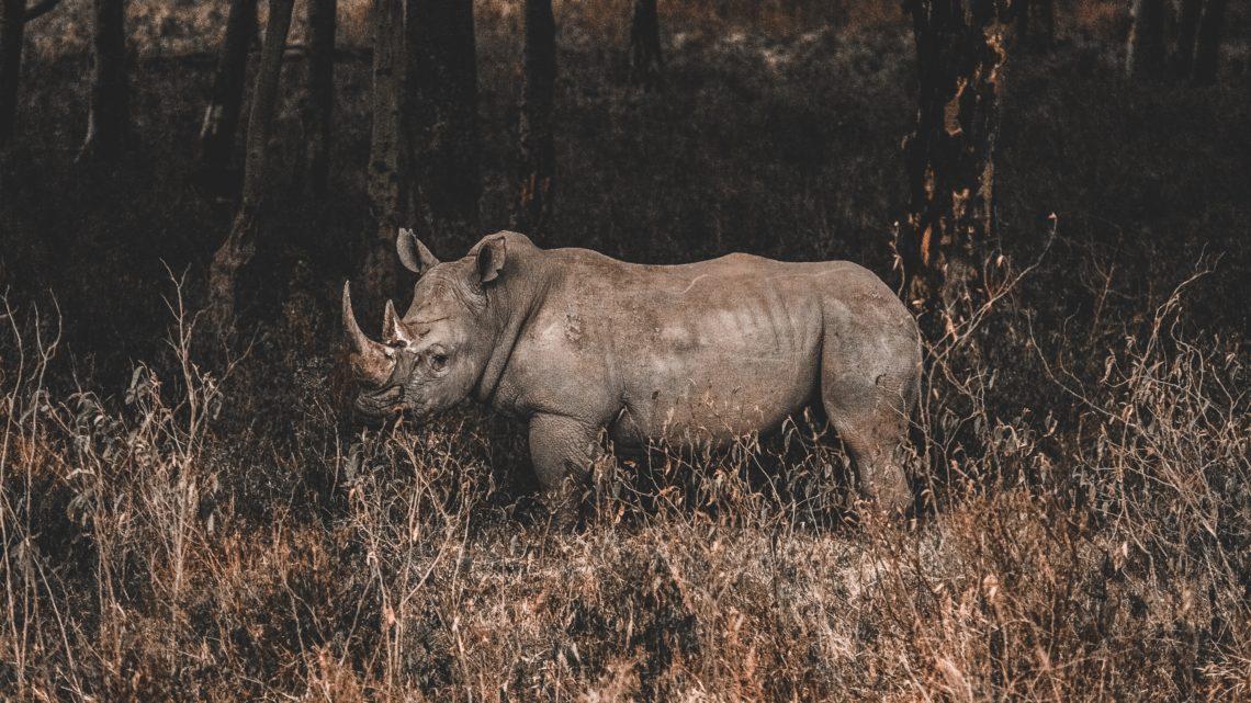 Les humains accélèrent significativement l'extinction des espèces